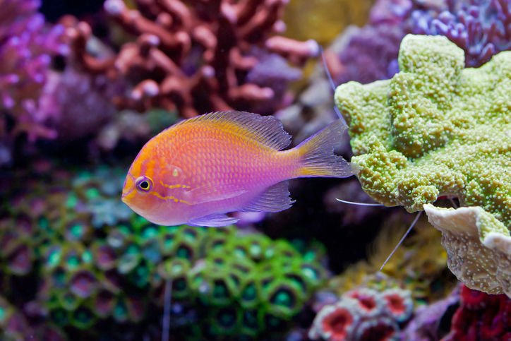 What You Should Know About Fish Tank Aquariums