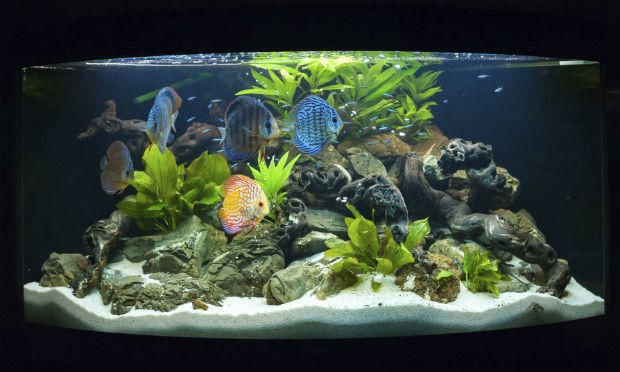 The Way to Pick the Best Fish Tanks