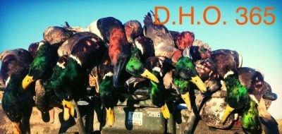 guided duck hunt southeast missouri
