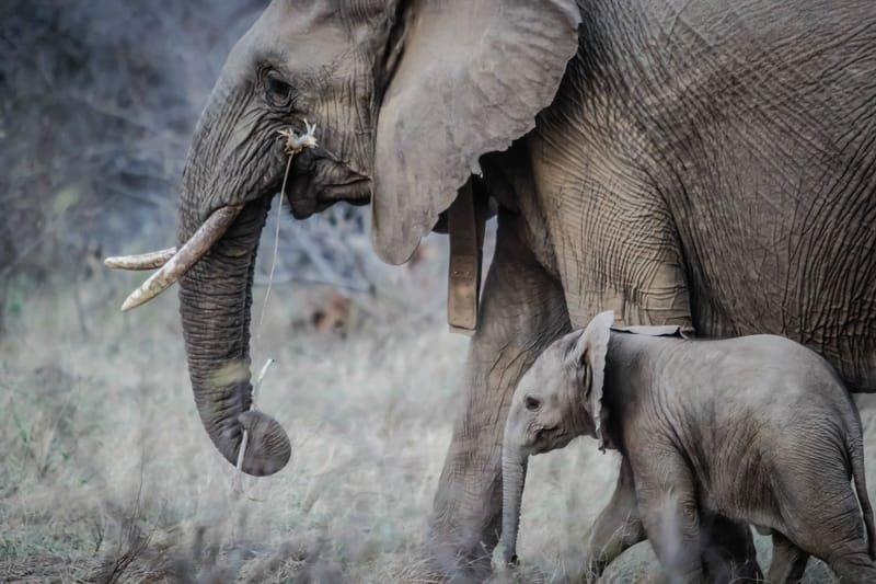 אהבת הורים