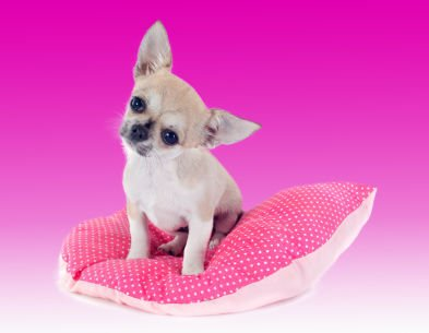 Factors to Consider when Choosing your Dogs' Bed