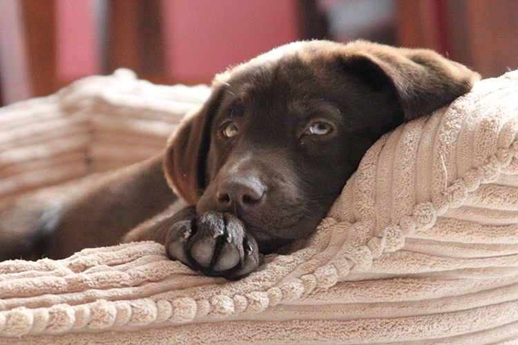 The Benefits of Good Dog Beds