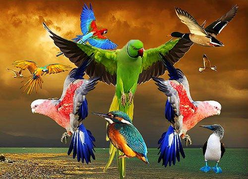 Рисунки все птицы мира