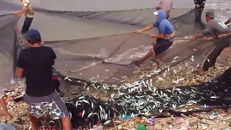 """صوت الشلف يحقق :  صيادون يقتلون الثروة السمكية بـ """"الديناميت """" بسواحل الشلف"""