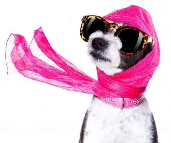 Get Designer Dog Fashion And Keep Your Pet Protected And Stylish