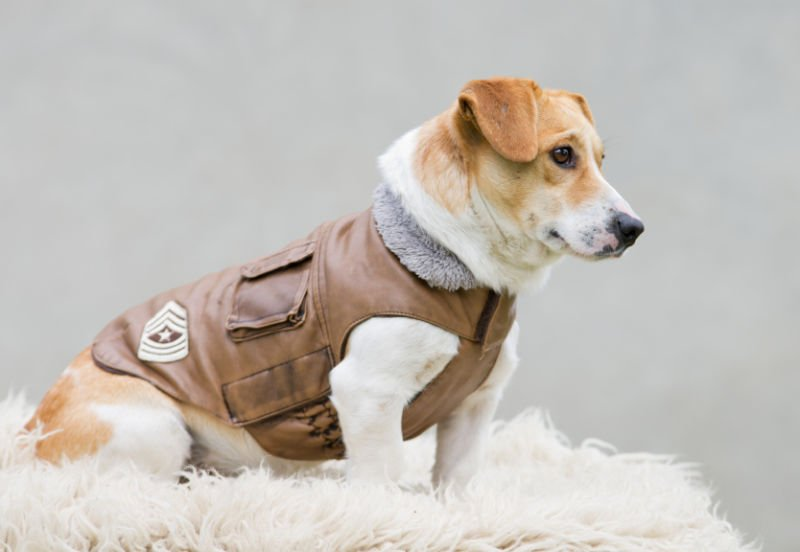 Find Out the Different Types of Dog Coats You Could Find In the Pet Boutiques Today