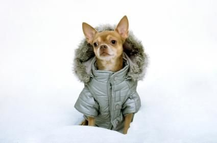What to Consider When Selecting Designer Fashion for Dogs?