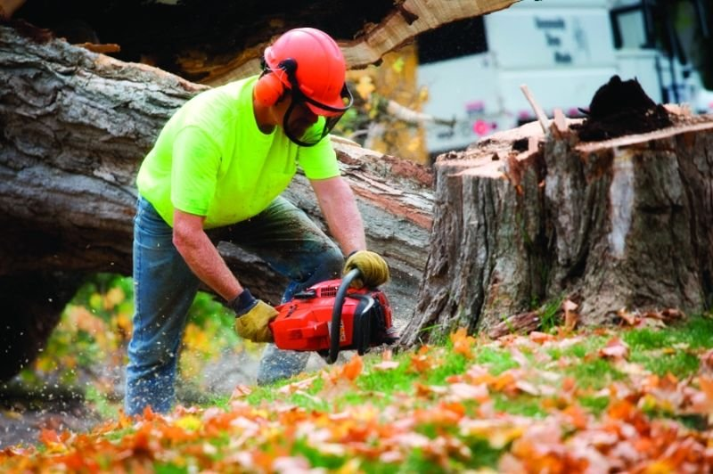Benefits And Reasons to Seek Assistance from Tree Service