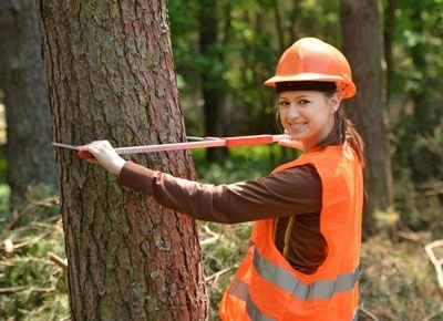 Importance of Hiring Tree Removal Services