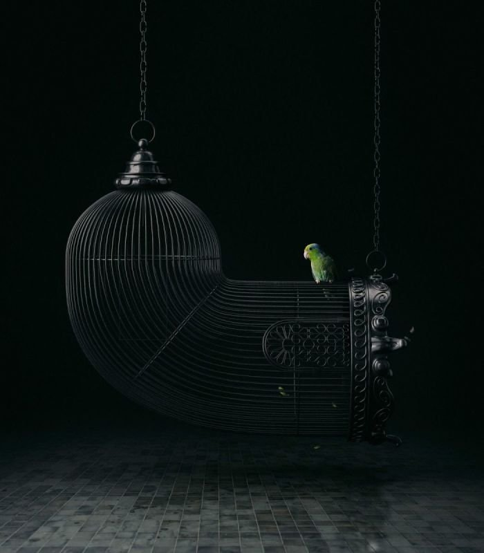 FREE BIRD | Mike Campau