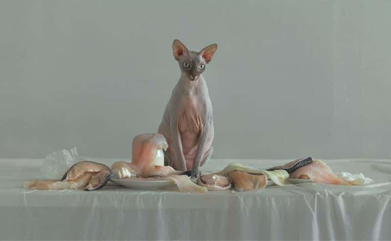 AN ORGANIC (still-life) | Evelyn Bencicova photography