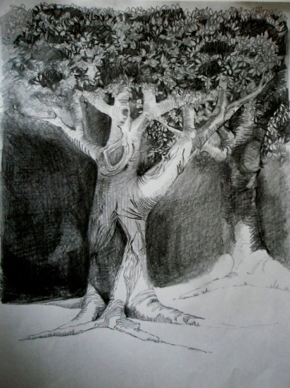 Study of Tree, Pencil on Paper 297 x 210mms