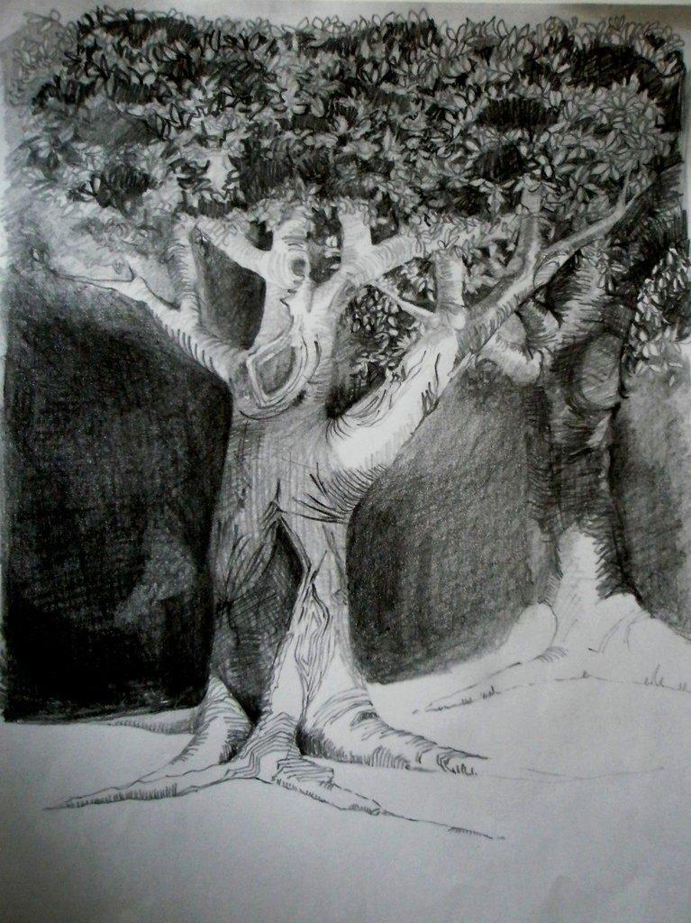 Study of Tree, Pencil on Paper 297 x 210mms
