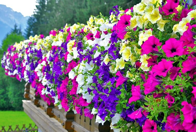 What Are The Best Seasonal Flowers For Spring 2018 Emerald Gardens