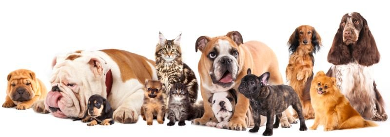 Choosing Pet Products for Your Most-Loved Pets