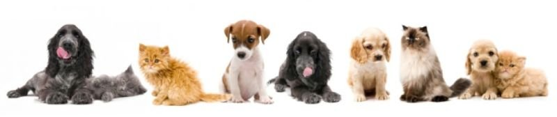 Aspects About Pet Products That An Individual Needs To Understand.