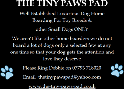 THE TINY PAWS PAD