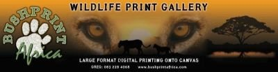 Bushprintafrica